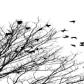 sběr větví