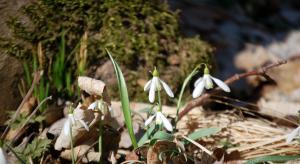 Litovelské Pomoraví  - jaro
