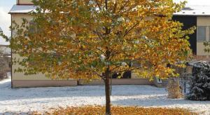 Zima a podzim