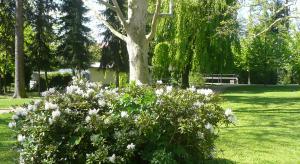 Kvetoucí rododendrony