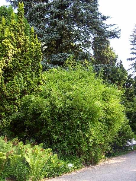 Bílá Lhota arboretum, obrázek se otevře v novém okně